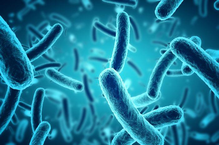 10+ Perbedaan virus dengan makhluk hidup lainnya ideas in 2021